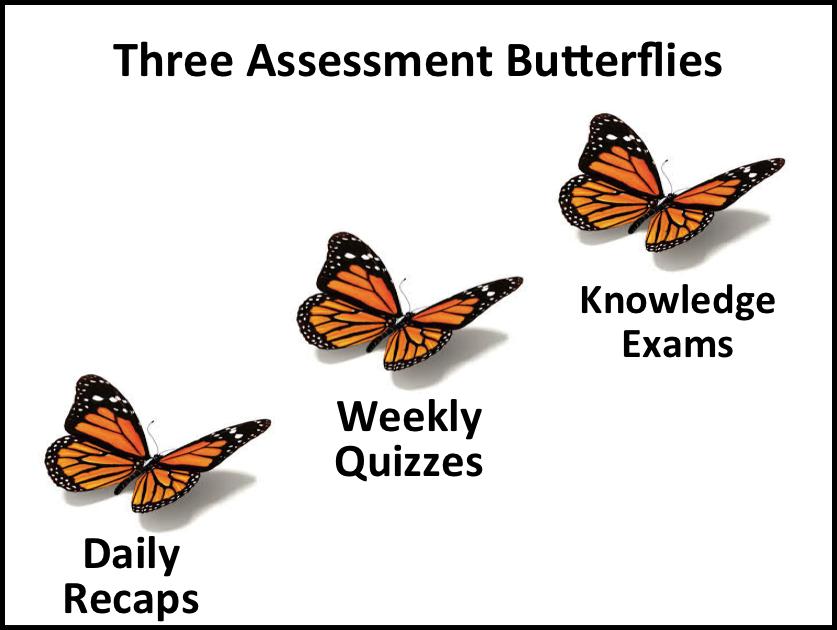 3AssmntButterflies.png